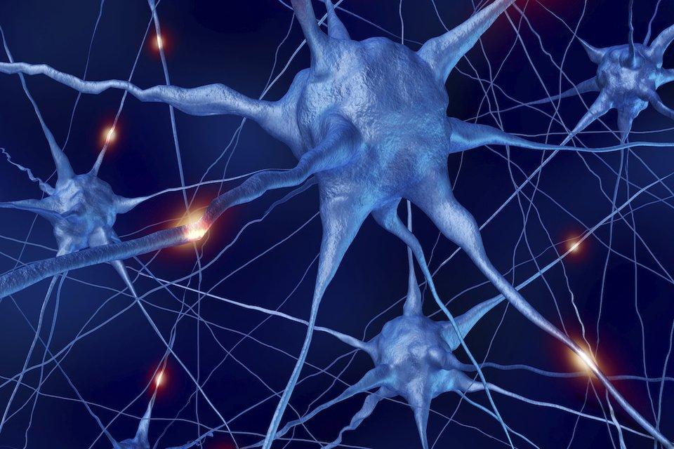 neuronale verbindungen im detail